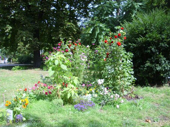 gabihelmchen_urban gardening02