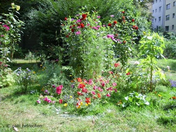 gabihelmchen_urban gardening01