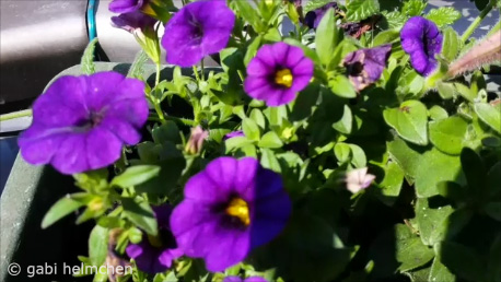 gabihelmchen_Balkon-Frühling01